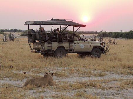 Sunset, Nature, Landscape, Sun, Africa, Feline, Animals