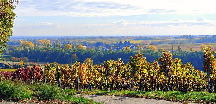 Autumn, Vineyards, Landscape, Vines, Wine