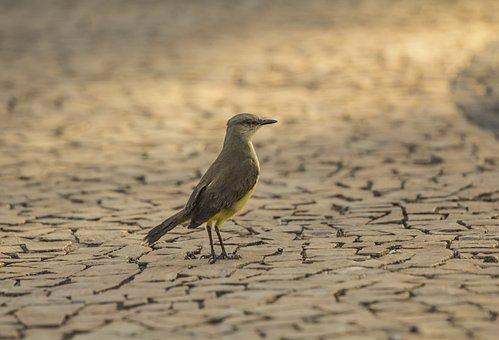 Bird, Landscape, Birdie, Ground, Wings, Nature