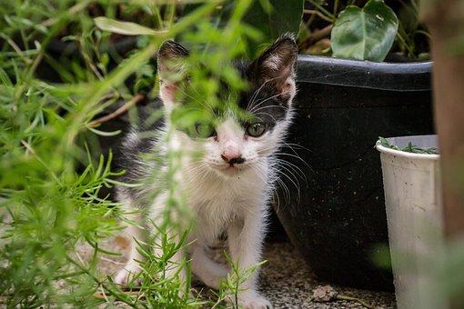 Cat, Kitty, Pet, Feline, Adorable, Domestic, Portrait