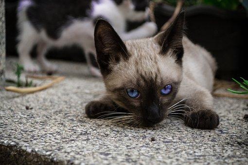 Cat, Kitty, Pet, Feline, Animal, Adorable, Domestic