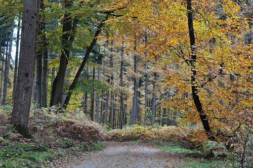 Orange, Leaves, Autumn, Fall, Dutch, Netherlands