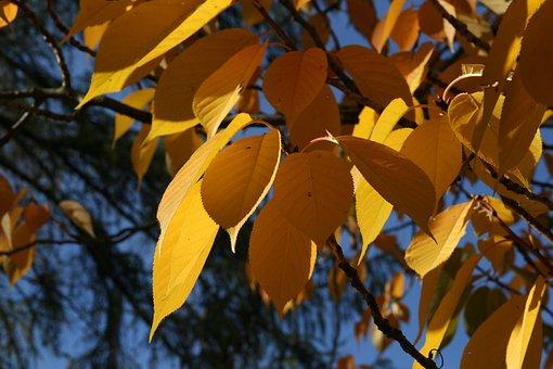 Autumn, Leaves, Fall Color, Yellow, Emerge, Autumn Mood