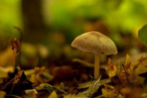 Mushroom, Autumn, Flocked