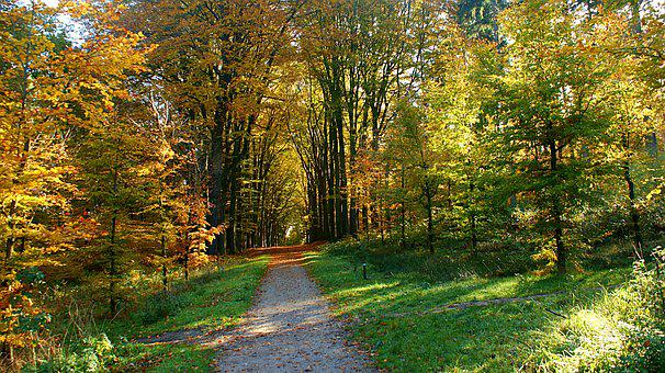 Path, Forest, Distance, Trees, Autumn, Forest Path