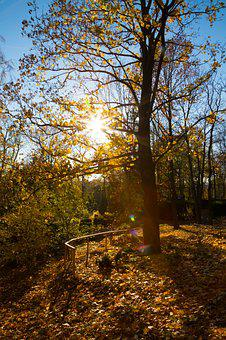Trees, Autumn, Landscape, Mood, Sunbeam, Shadow, Leaves