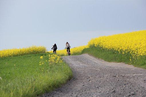 Bike, Field, Rapeseed, Green