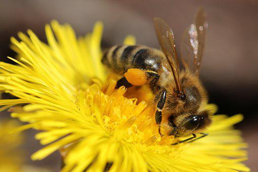Bee, Flower, Insect, Bloom, Nature, Pollen, Blossom
