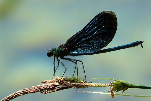 Dragonfly, Insect, Fly, Summer, Nature, Blue, Beautiful