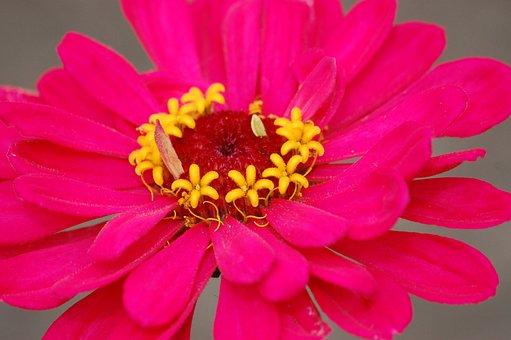 Flower, Pink, Bright, Spring, Nature, Blossom, Garden