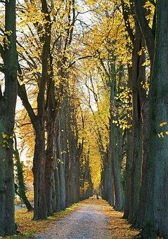 Avenue, Late Autumn, Emerge, Leaves, Colorful, Golden
