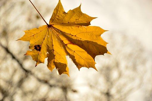 Leaf, Leaves, Single-sheet, Autumn, Coloring