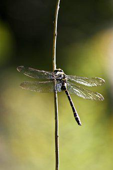 Dragonfly, Insect, Insects, Nature, Wing, Green, Wings