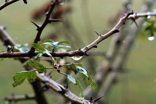 Branch, Drip, Close Up, Nature, Green