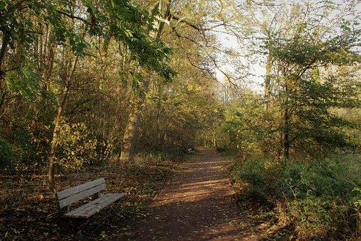 Leaves, Autumn, Mood, Fall Colors, Fall Foliage