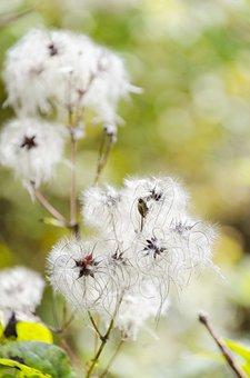 Plant, Nature, Green, Garden, Flowers, Summer, Flora