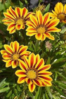 Flowers, Yellow, Garden, Nature, Summer