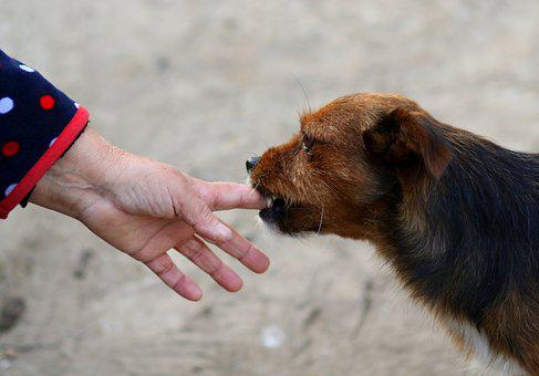 Dog, Hand, Fly, Funny, Pet