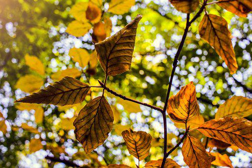 Leaves, Autumn, Fall Leaves, Forest, Nature, Sunbeam