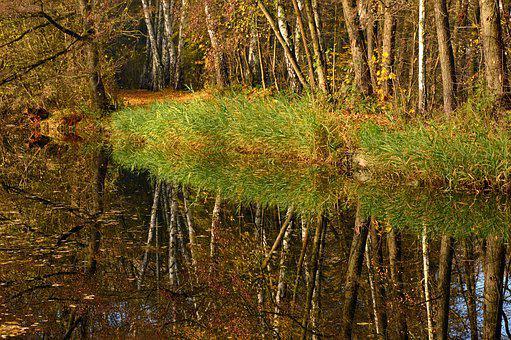 Mirroring, Reflection, Water, Pond, Trees, Forest