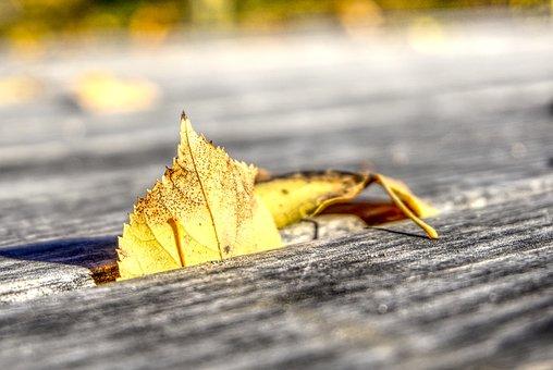 Leaves, Leaf, Autumn, Colorful, Still Life, Wood, Gap