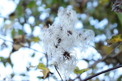 White, Flower, Leaves, Plant, Nature, Garden, Season