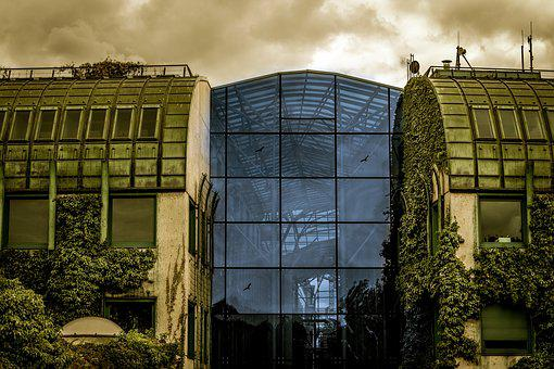 Architecture, Glass Wall, Ivy, Glass, Modern