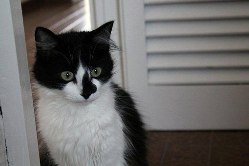 Cats, Animals, Pets, Kitten, Feline