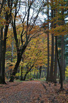 Dutch, Trees, Autumn, Fall, Leaves, Landscape