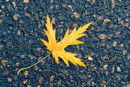 Autumn, Leaf, Asphalt, Plant, Maple, Tree, Yellow