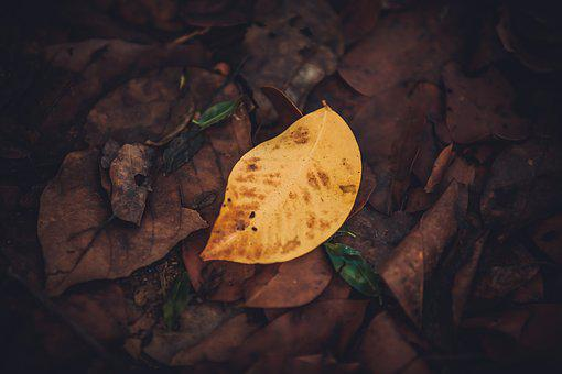 Leaf, Abstract, Yellow, Tree, Forest, Background, Block