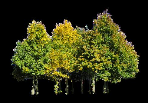 Nature, Tree, Autumn, Season, Leaves, Isolated, Beech