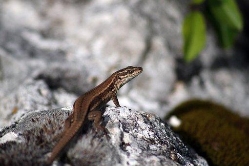 Lizard, Reptile, Green, Nature, Creature, Dragon