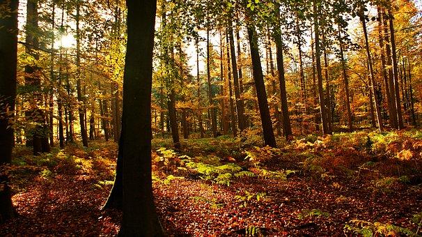 Forest, Morning, Landscape, Sunlight, Mystical, Nature