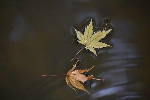 Natural, Landscape, Autumnal Leaves, Fallen Leaves