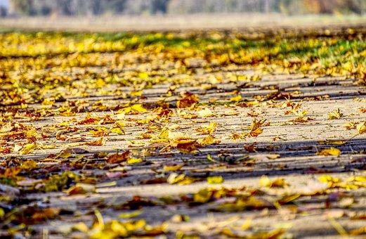 Leaves, Autumn, Colorful, Nature, Fall Foliage, Forest