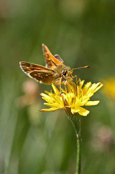 Butterfly, Insects, Plants, Flower, Colorful, Nectar