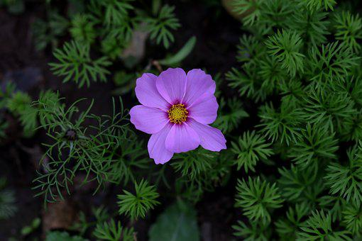 Flower, Mov, Pink, Plant, Supplies, Nature, Flora