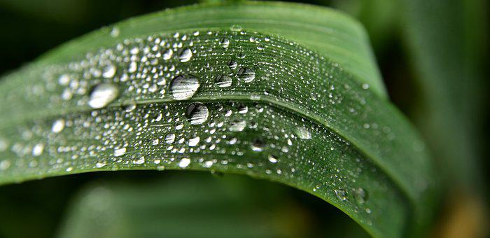 Grass, Drip, Nature, Water, Plant, Dewdrop, Wet