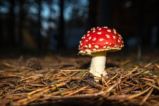 Mushroom, Fly Agaric, Toxic, Autumn, Spotted, Red