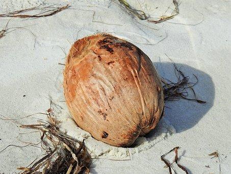 Coconut, Fruit, Beach, Sand, Food, Atlantic, Shell