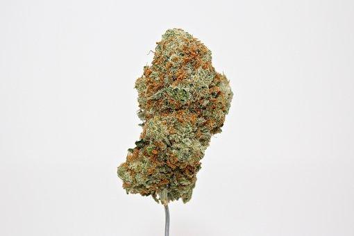 Weed, Cannabis, Marijuana, Dank, Ganja, Thc, Stoner