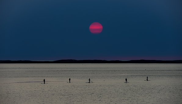 Sunset, Sea, Paddle, Sup, Stand-up Paddle, Twilight