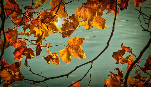 Sycamore, Autumn, Leaves, Mood, Autumn Colours, Yellow
