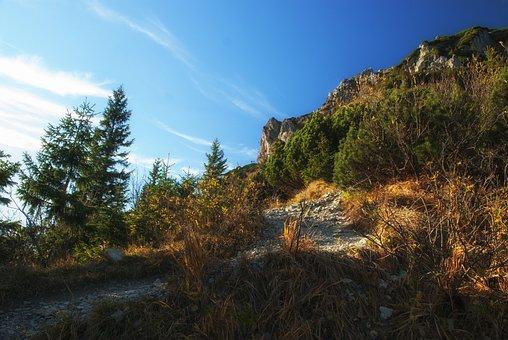 Autumn, Nature, Forest, Trees, Mood, Foliage, Fall