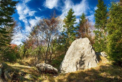 Autumn, Nature, Forest, Trees, Mood, Foliage, Light