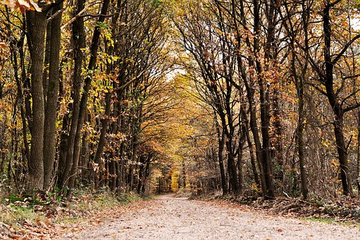 Dutch, Forest, Tree, Nature, Trees, Netherlands, Autumn
