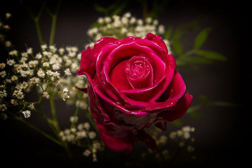 Rose, Red, Wax, Forever, Preserve, Durable, Cast