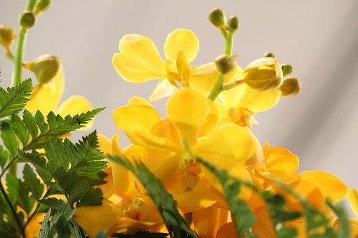 Yellow, Flowers, Photos, Bright, Beautiful, Decorate