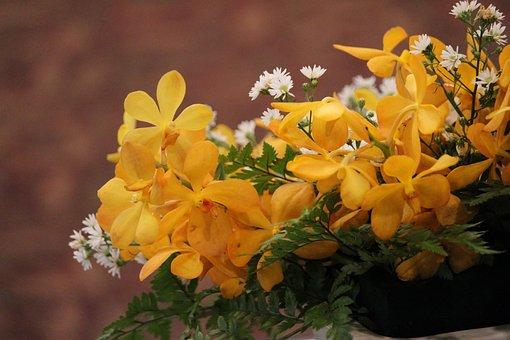Flowers, Yellow, Bright, Flower, Plant, Garden, Beauty